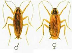 aralar-desinfeccion-cucaracha-rubia-ficha