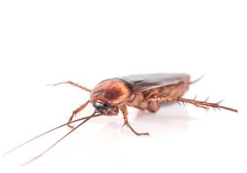 aralar-desinfeccion-cucarachas