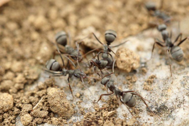 aralar-desinfeccion-hormigas
