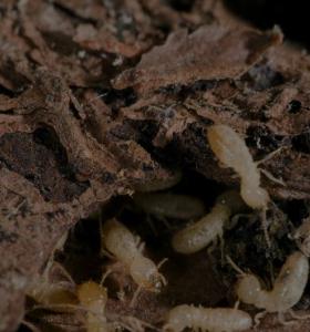 aralar-desinfeccion-madera-termitas